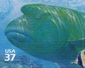 US Stamp Gallery >> Humphead wrasse, Moorish idol