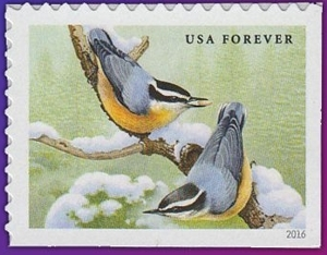 Red-Breaster Nuthatches
