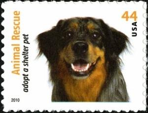 US Stamp Gallery >> Australian Shepherd