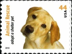 US Stamp Gallery >> Yellow Labrador Retriever