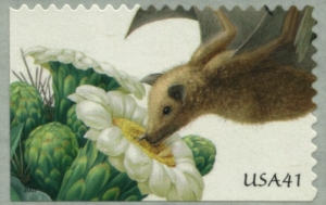 Satuaro, lesser long-nosed bat