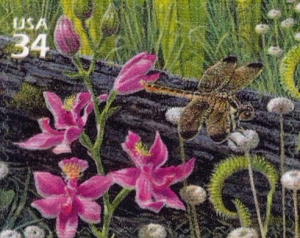 US Stamp Gallery >> Grass-pink orchid, yellow-sided skimmer, pipeworts, yellowpticher plants