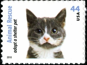 US Stamp Gallery >> Gray, white & tan cat