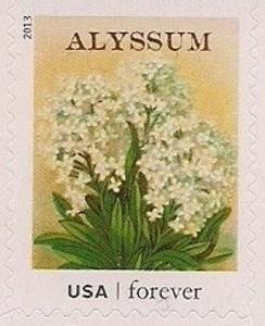 US Stamp Gallery >> Alyssum