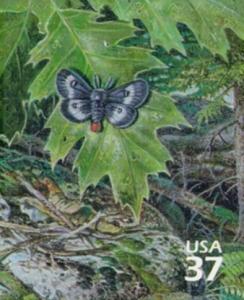 US Stamp Gallery >> Eastern buckmoth