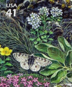 US Stamp Gallery >> Rocky Mountain parnassian butterfly
